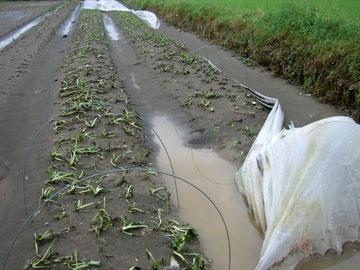 八八災後 美濃有機米產銷班