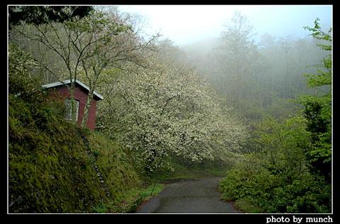 回首觀霧-災後的山林開發政策
