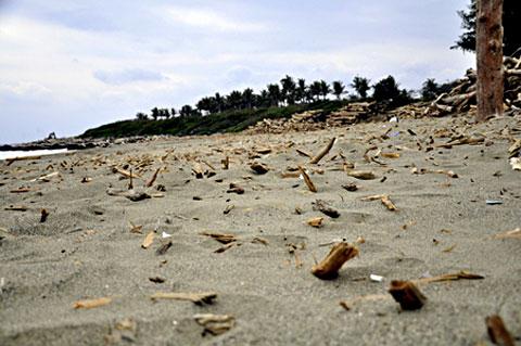 另類災區-漂流木撞擊莿桐部落