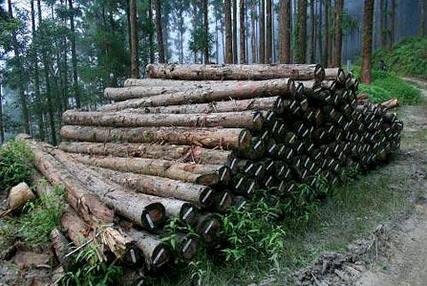 誰是山林破壞者?論國土復育政策