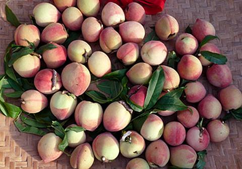 荖濃縱谷的世外桃源:老杜的水蜜桃