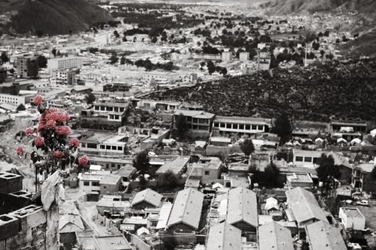 20 一束紅玫瑰被放置在結古寺旁的山坡上,祝福玉樹能儘速完成重建,罹難者家屬也能早日走出傷痛