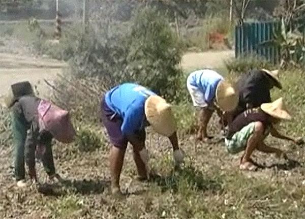 嘉蘭報告64、65:學種小米