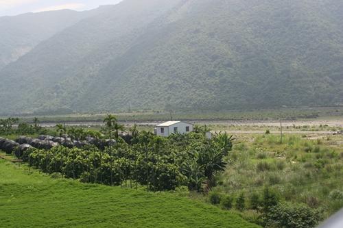 農民生計,與河共存:河川地高莖作物種植規則修正