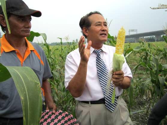 長治百合部落(19)水果玉米試種成功