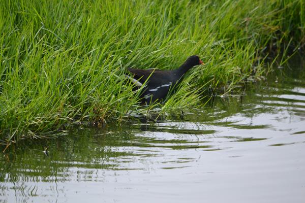 鎮安濕地:調節水患,也孕育自然生態