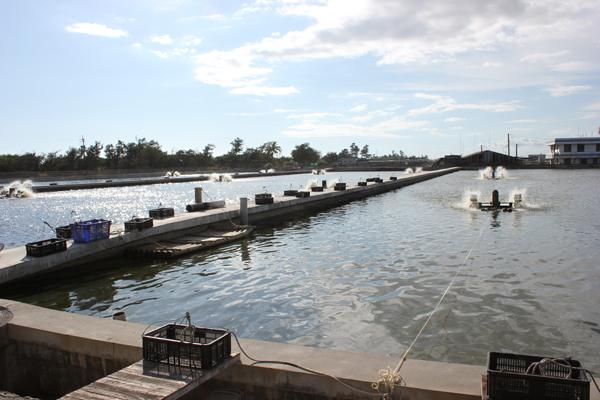 黑珍珠、石斑、太陽能板─屏東沿海平原的災後產業重建