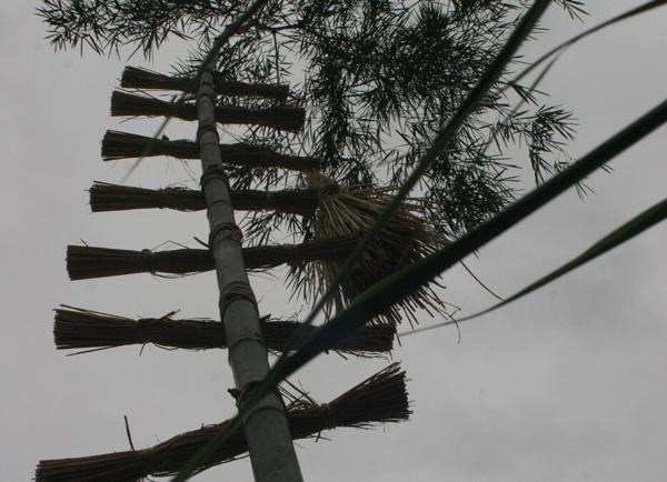 災後最完整的小林夜祭(2)立向竹,正式「開向」