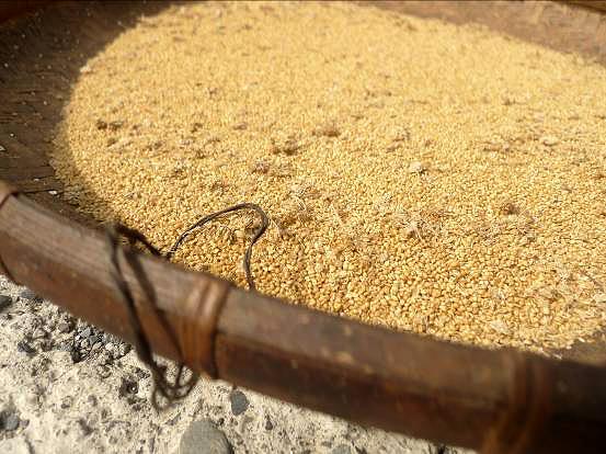 食物與小農(11)大鳥部落排灣族的肥料-拉芙盎