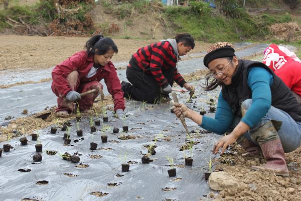 牡丹水庫徵收之後,中間路部落嚐試復耕陸稻