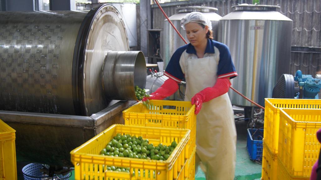 原鄉青梅產業如何出發、轉型?信義鄉梅子夢工廠經驗分享
