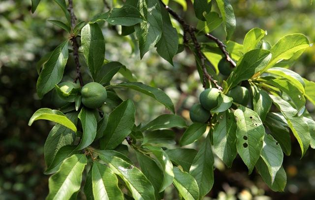 果樹與人的空氣─寶山部落38甲地遷村案回顧
