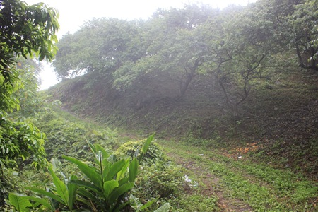IMG_8381海拔1300公尺的梅園,你看得出來哪裏是路嗎?