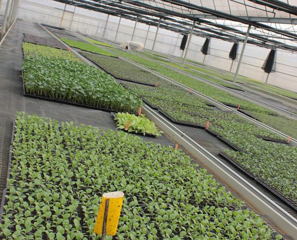 災後重建的集體農場夢(3)高雄永齡杉林有機農業園區,場長李惟裕訪談錄