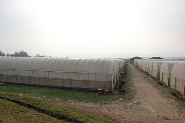 災後重建的集體農場夢(6)永齡農場變調,市政府另覓土地,鼓勵大愛住民租種