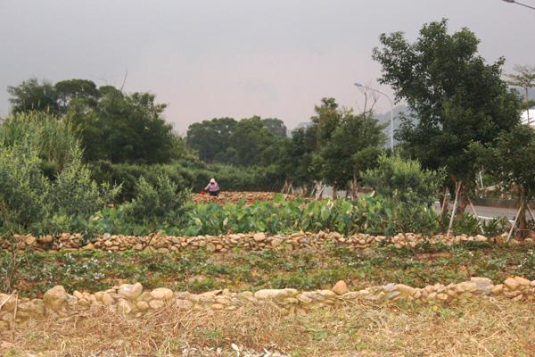 禮納里部落(24)大社村民組成「自然農法」產銷班,對未來寄予厚望