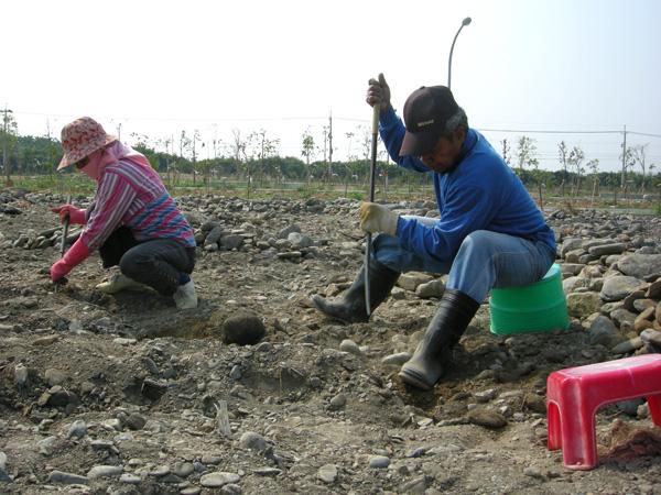 從撿石頭開始,親手挖的土地─新來義永久屋開放耕作